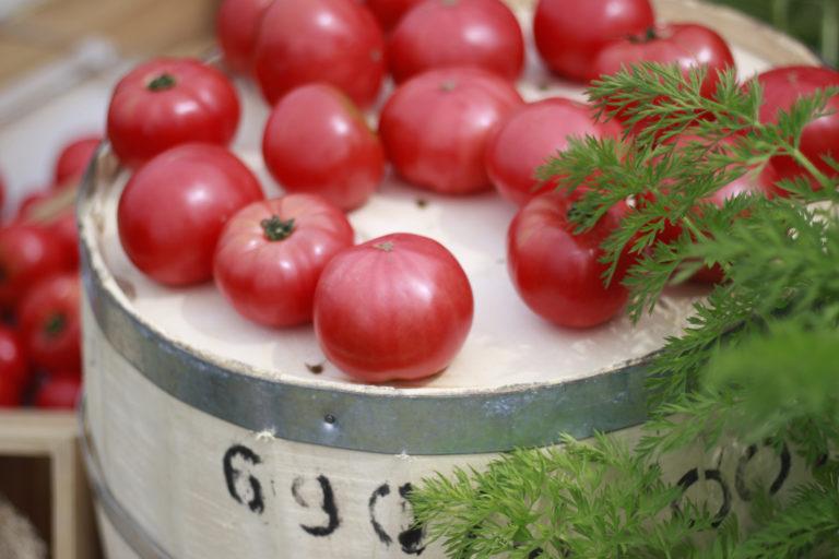 無料写真素材 トマト