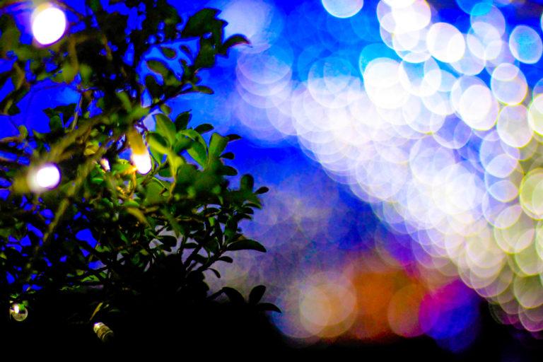 青い光と木のイルミネーション