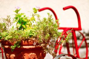 赤い自転車と植木鉢