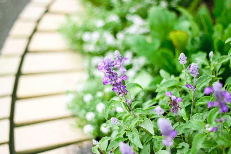紫色の小さい花