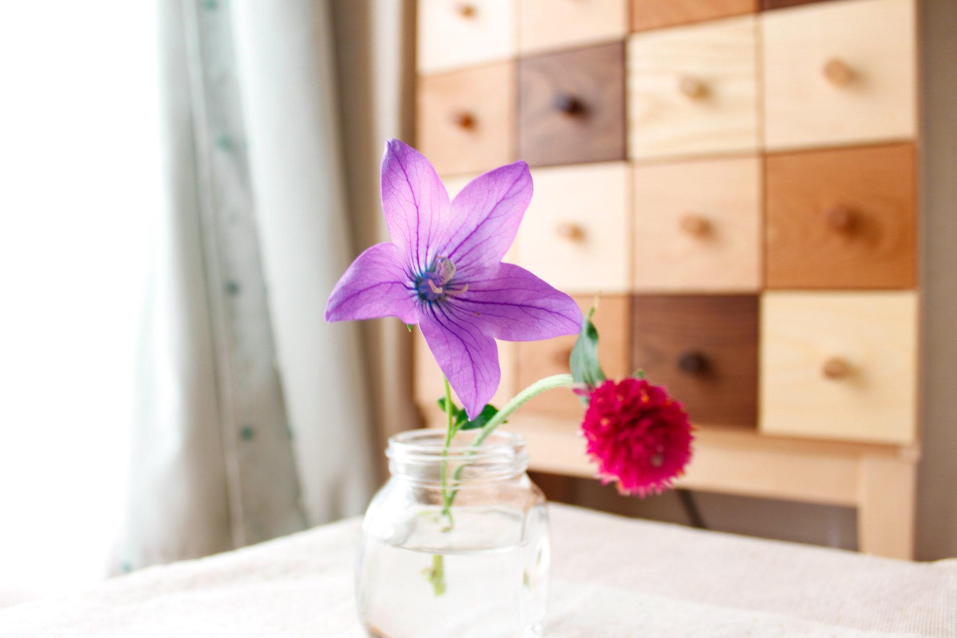 小さな花瓶の桔梗とパッションピンクの花