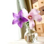 小さな花瓶の桔梗と薄ピンクの花 1
