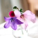 小さな花瓶の桔梗と薄ピンクの花 3