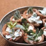 ミニ多肉植物 2