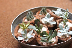 ミニ多肉植物