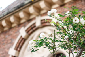 レンガ造りの建物と白いバラ