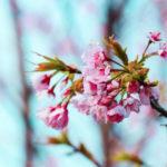 桜と空 1