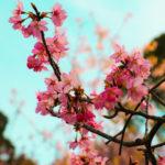 桜と空 2