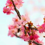 桜と空 3
