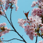 桜と空 4