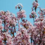 桜と空 6