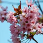 桜と空 7
