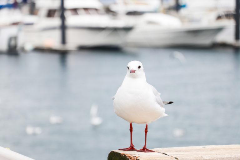 港で羽を休めるゆりかもめ