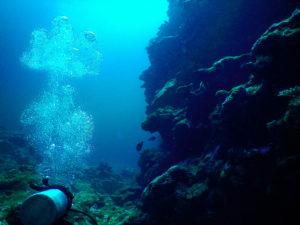 沖縄石垣島の海中風景