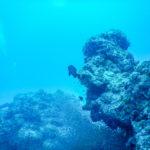 沖縄石垣島 ダイビング 小魚の群れ