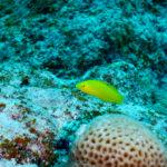 水中の黄色い魚