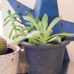 多肉植物の小さな鉢植え