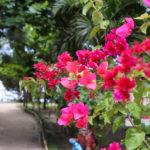南国の花 1