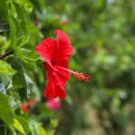 南国の花 2