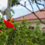 南国の花 3