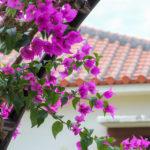 南国の花 4