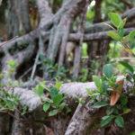 森の中の新緑 1