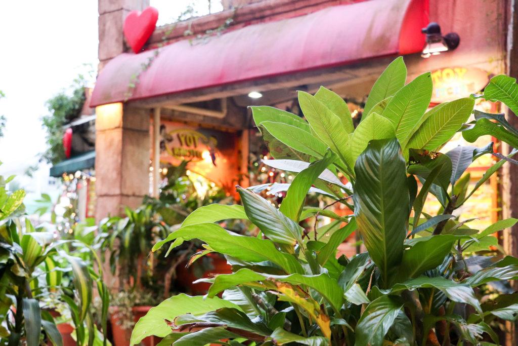 ショッピングモールの植物