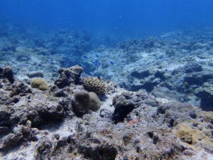沖縄のサンゴ礁の青い海