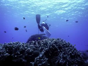 サンゴ礁でダイビング