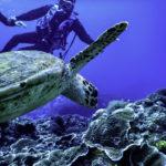 アオウミガメを囲むダイバー