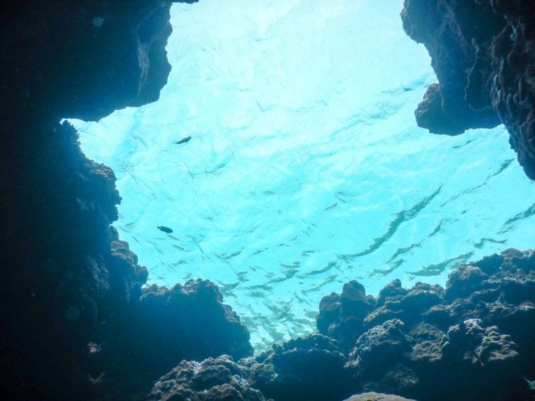沖縄慶良間諸島のダイビング
