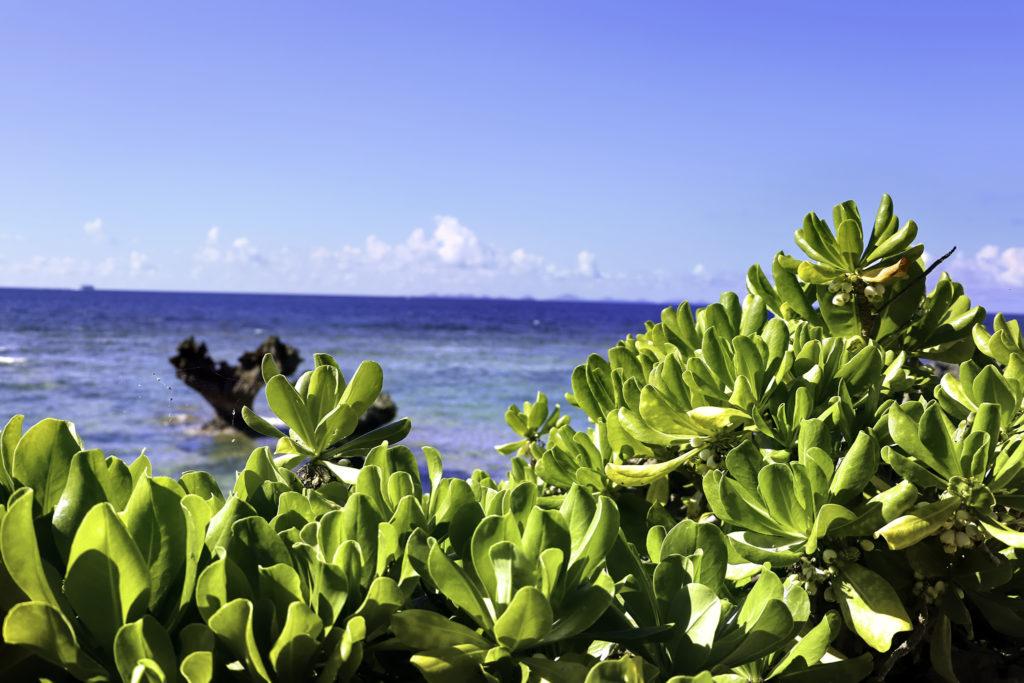 古宇利島 ティーヌ浜の海