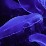 沖縄美ら海水族館 くらげ