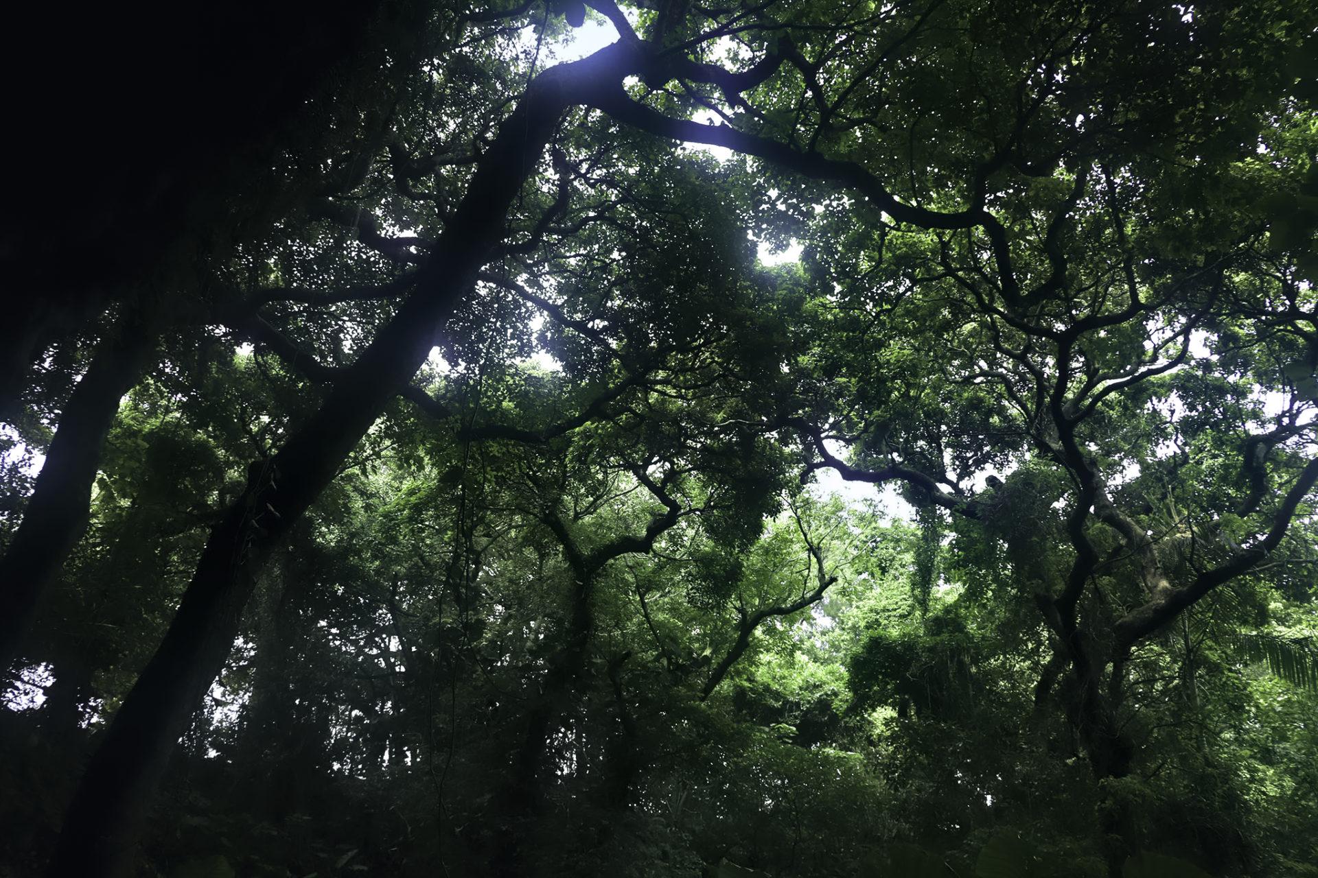 カンガラーの谷 森の中