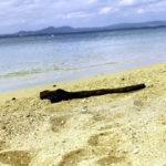 南国の青い海と砂浜と流木 5