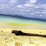 南国の青い海と砂浜と流木 4