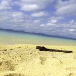 南国の青い海と砂浜と流木 3
