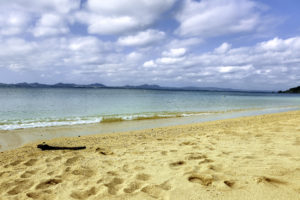 南国の青い海と砂浜と流木