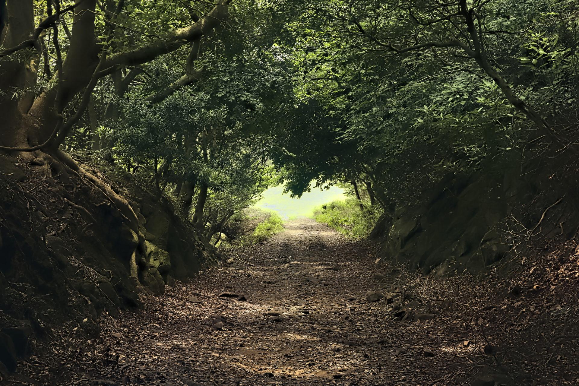 友が島 草木のトンネルの先の光