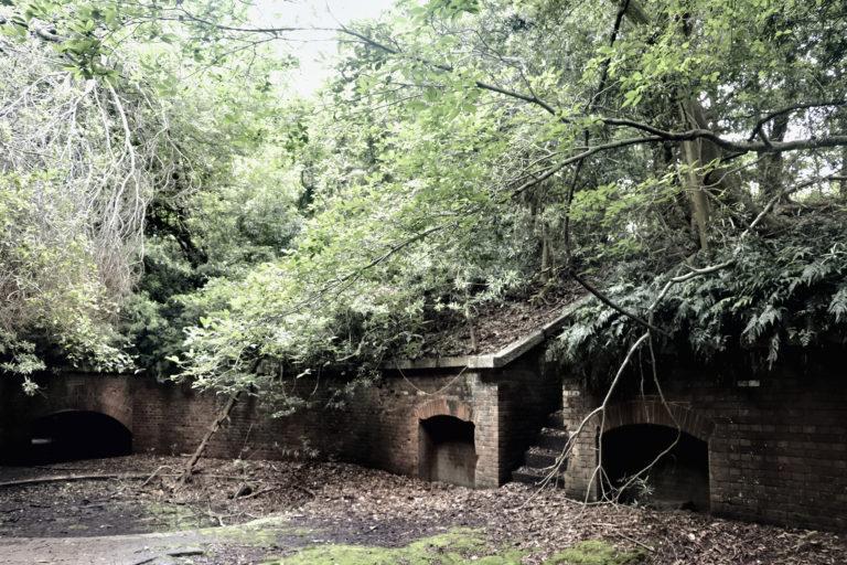 友が島 第三砲台 砲座跡に生い茂る草木