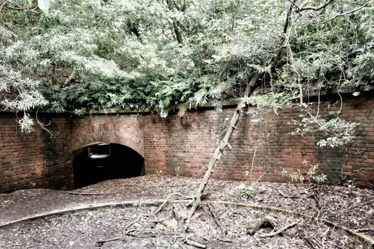 友が島 第三砲台 水のない砲座跡に朽ちた木