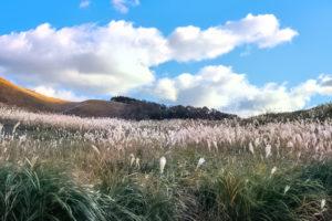 すすきが一面に広がる高原と秋空