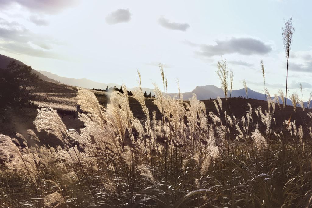 壮大な高原とすすき