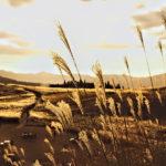 夕暮れ時の高原とすすき