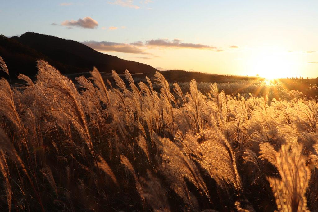 夕日の高原と黄金のすすき