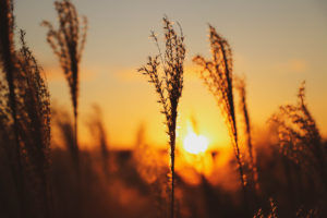 間もなく沈む夕日とすすき