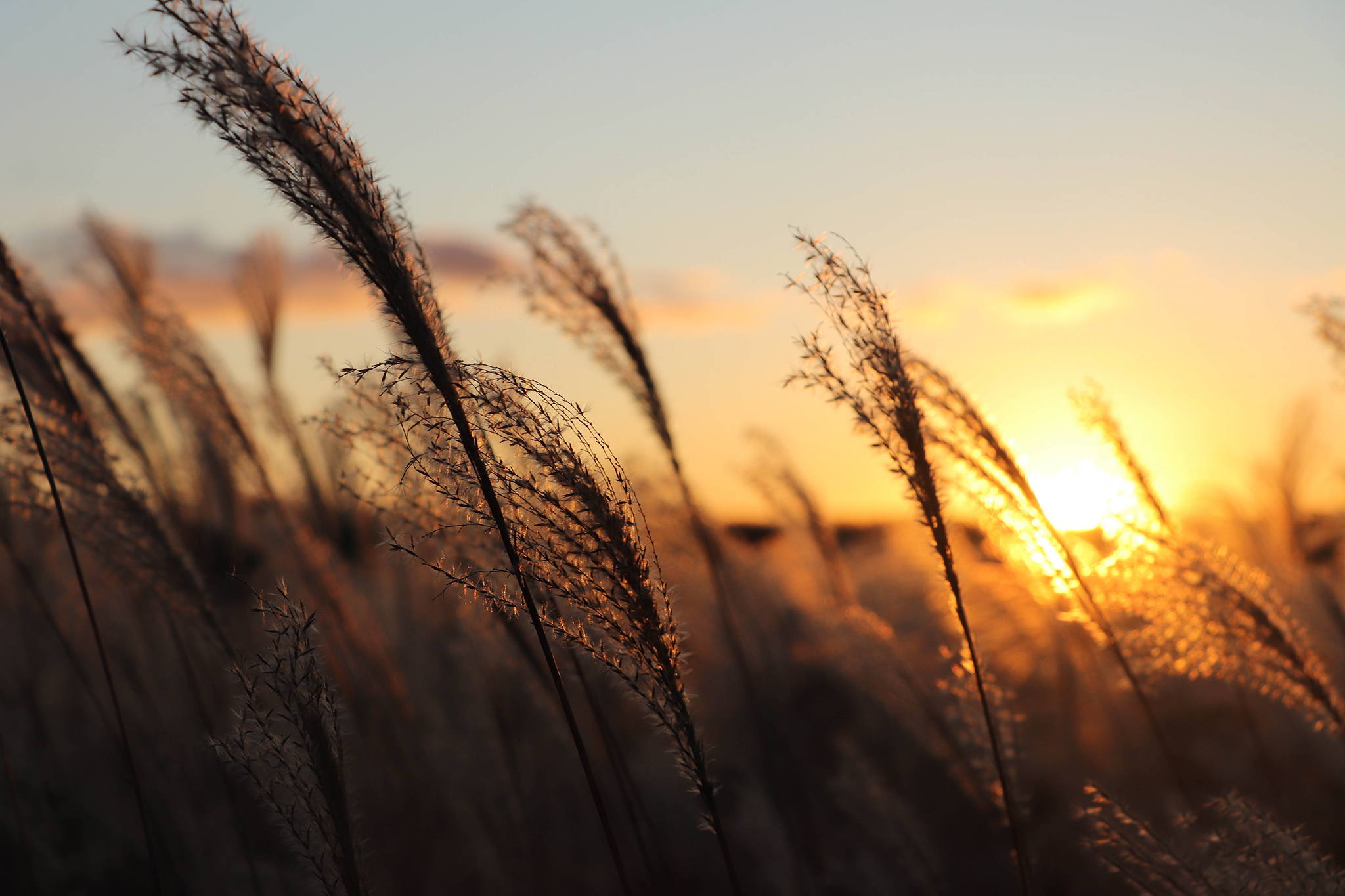夕映えの空とすすき – フリー(無料)写真素材 ダウンロード blue-green