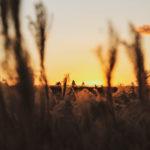 遠くに沈みゆく夕日とすすき