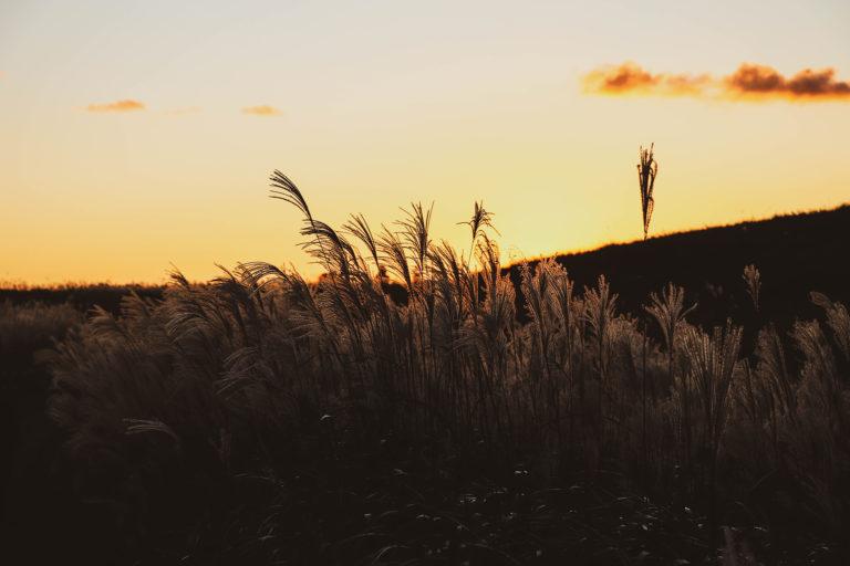 マジックアワーの草原とすすき