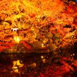 水面に反射する清水寺の鮮やかな紅葉